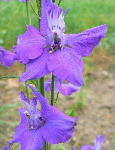 fleur 20
