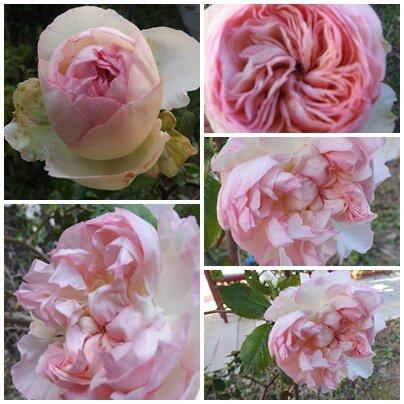 Ciel 10 06 & fleurs (14)
