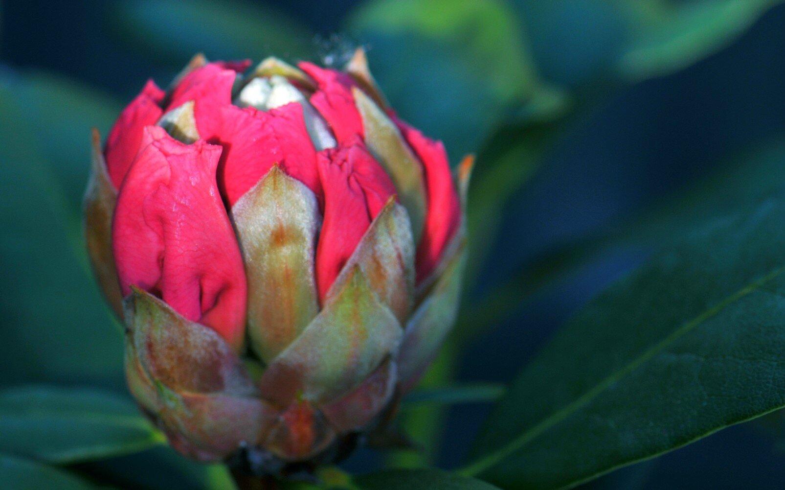 Promesse de fleurs les photos et diaporamas de damienne for Promesse de fleurs