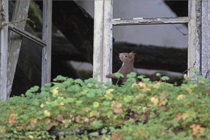 Ruine écureuil fenêtre 111220