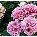 Pour un octobre tout en rose