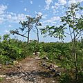 Xintia est passée par là,plus de forêt..