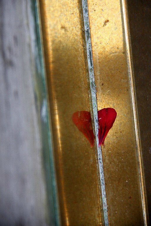 Coeur, pétale, reflet_2210