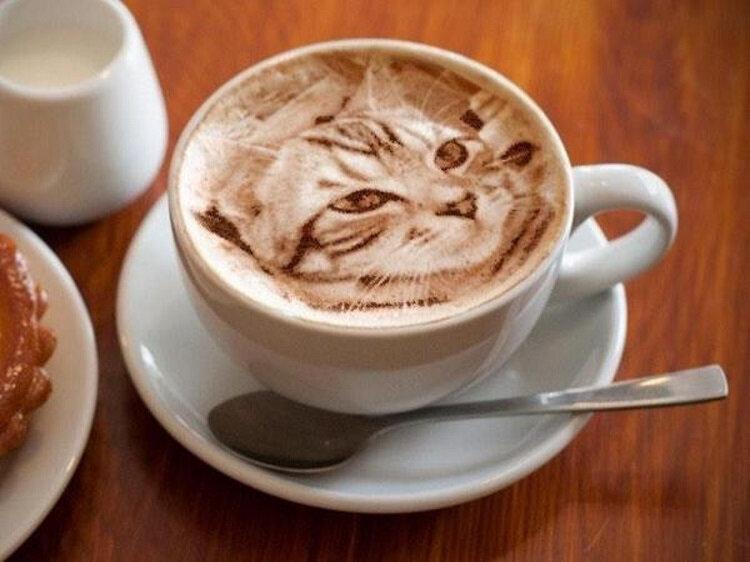 chat-café-1