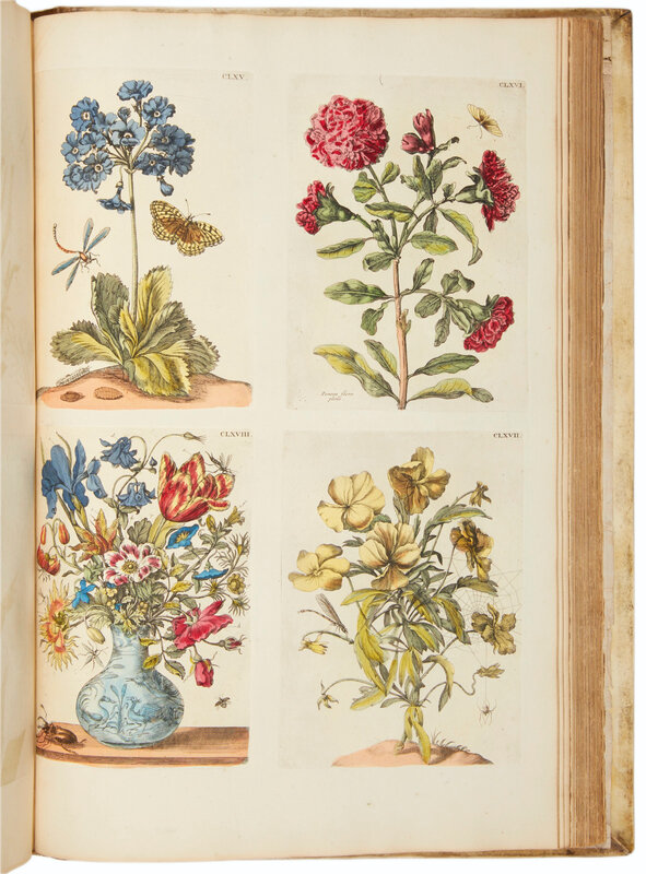 2019_NYR_17666_0115_008(maria_sibylla_merians_great_plate_books_on_insects_amsterdam_1719_1730)