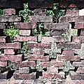 Mur Ile Royale