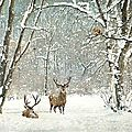 cerf hiver neige foret