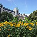 Londres, l'insolite et la fascinante