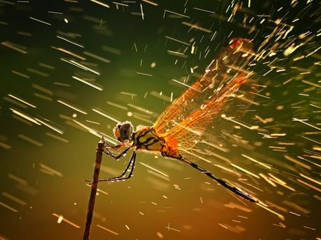 national_geographic_photo_contest_2011_nature_01