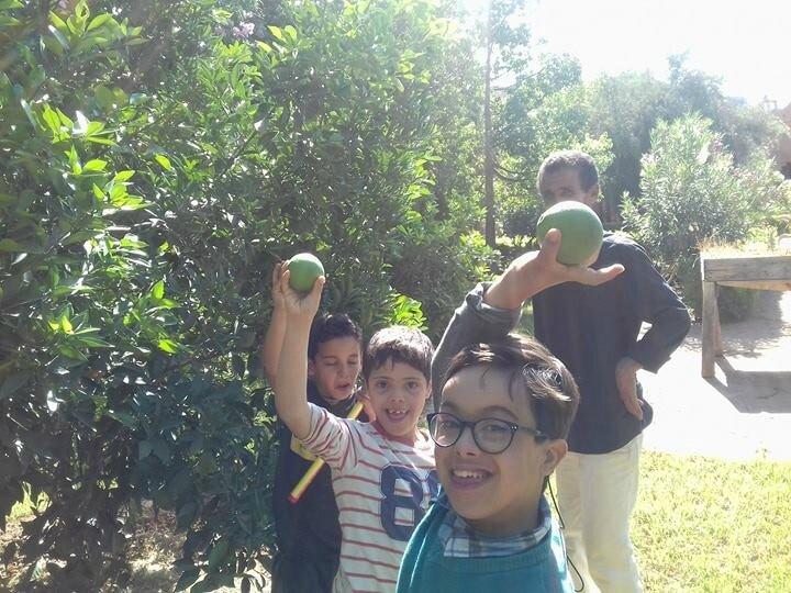Cueillette des oranges encore vertes sous l'oeil de Mohamed (le papa d'Ayoub)