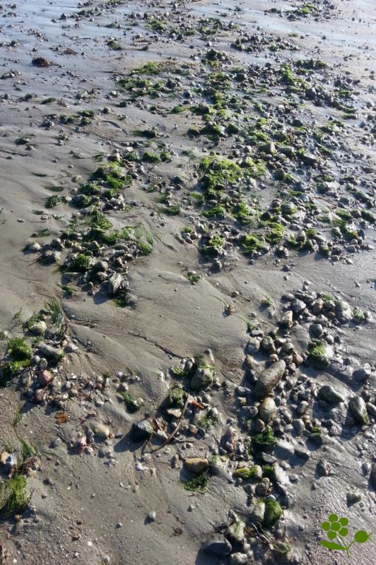 Dinard, plage à marée basse