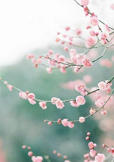 Inspiration Japonaise Kimonos Et Fleurs De Cerisier Ilmatarja