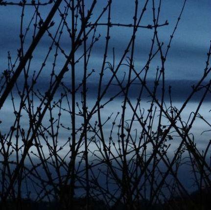 ciel en cage fév 2013 (3)