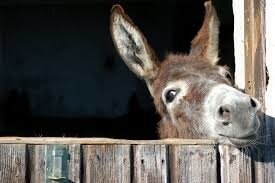 World Donkey Day (8th May) | Days Of The Year