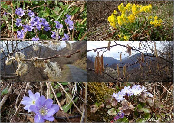 fleurs sauvages printemps 2010 pf