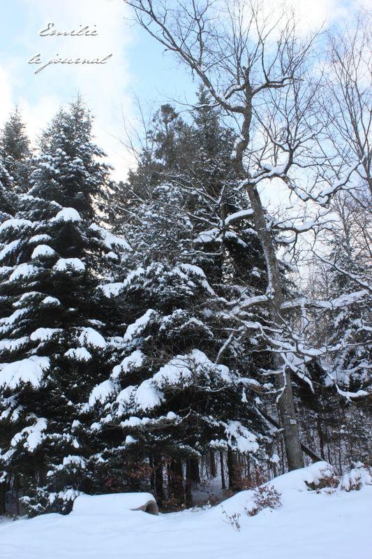 Hohwald neige23