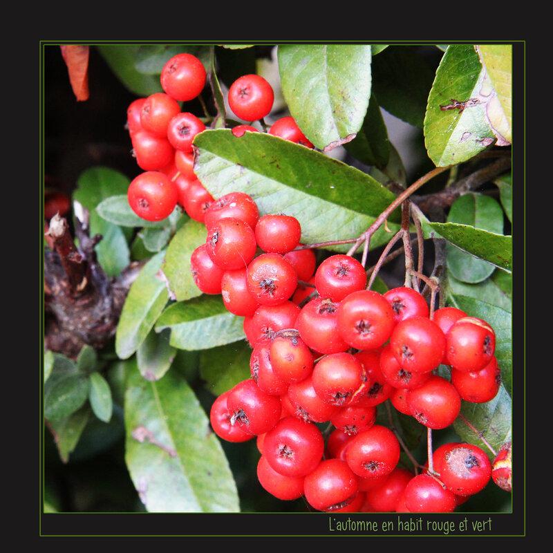L'automne en rouge et vert