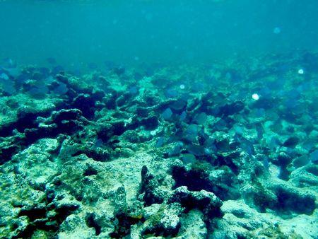 SB poissons et corail 20120528 1