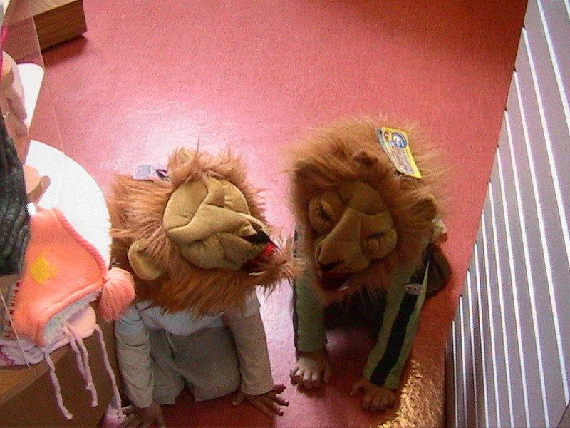 DES LIONS SE SONT ECHAPPES !