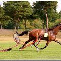 Le cheval est bien arrivé, quand au jockey il a fini à pied... lol...