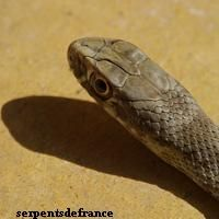 serpents_3b