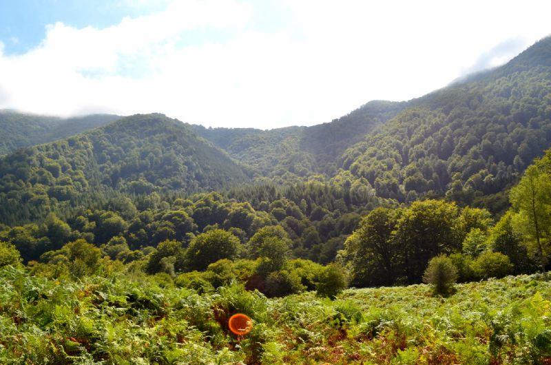 Vue sur le col de Boesou et la forêt depuis les prairies d'Issau