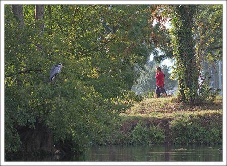 ville heron bois promeneurs matin 290912
