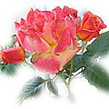 colorful_rose_wallpaper_1913