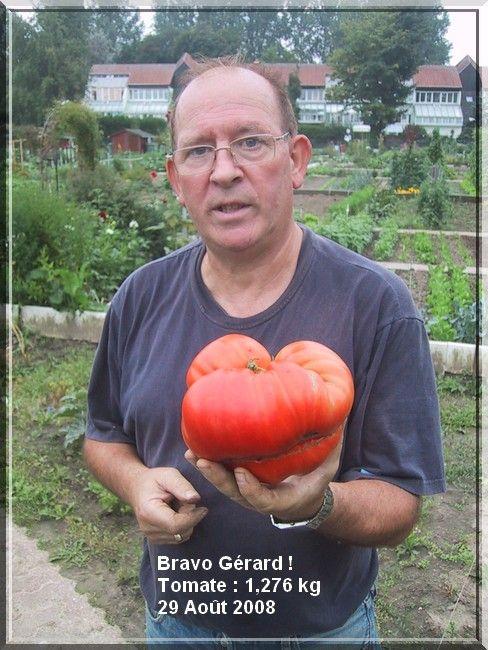 1 seule tomate 1,276 kg dans le jardin du voisin Bravo Gérard ! 29/08/08