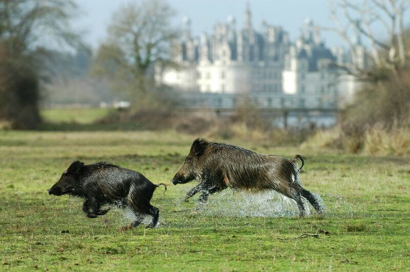 (c) Domaine National de Chambord (2) - Copie