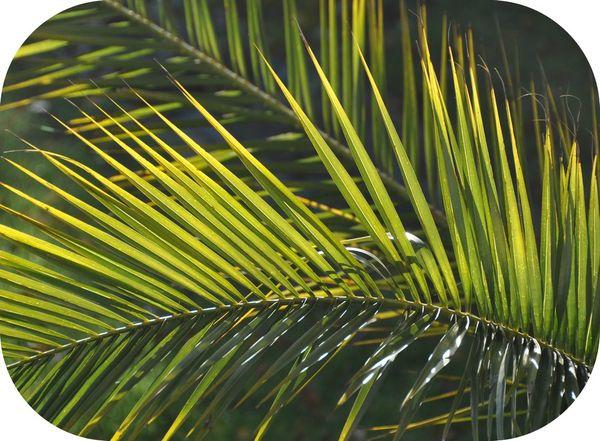déco feuille de palmier