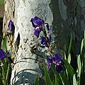 Chroniques d'un printemps paresseux - 13