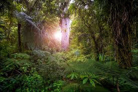 maori environement 4 tane