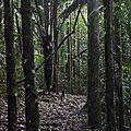 Excursion en forêt depuis le gîte d'Angoulème