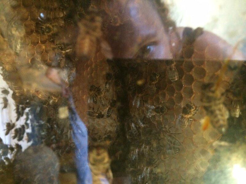 morgan le cam musée de l' abeille vivante 29 aout