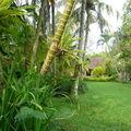 Jardin d'un musee - Bali