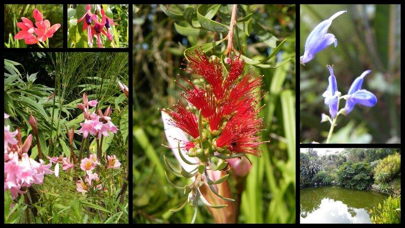 2014-08-29 roscof jardin2