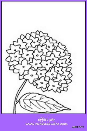 dessin hortensia