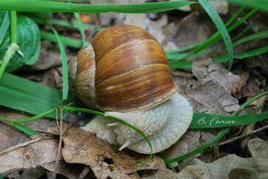 canalblog 2010 05 DSC_0126