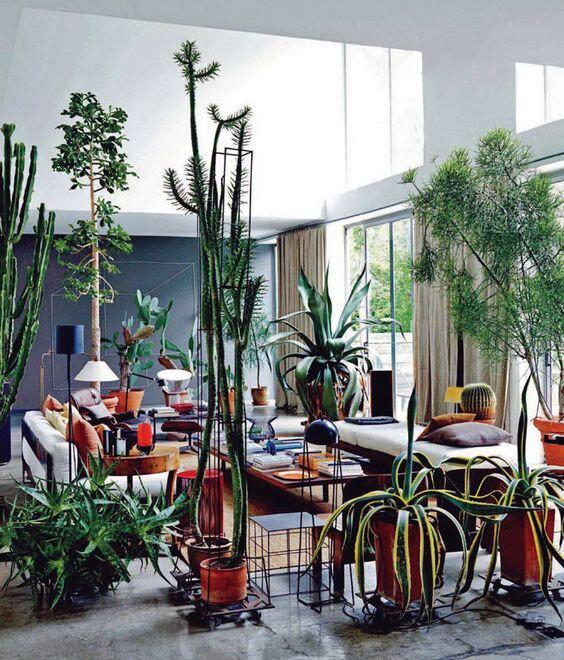 cactus interieur maison