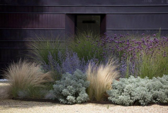 aménagement-jardin-moderne-graminées-ornementales
