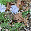 Eveiller le sentiment maternel / méditation d'amma / j. ramsell howard / barnard julian / fleur de bach : chicory