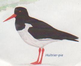 hu_trier_pie