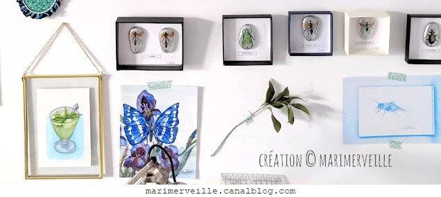 collection galets d'entomologie - mur atelier -creations marimerveille