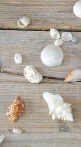 little shells