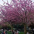 printanière parfumée / scented spring