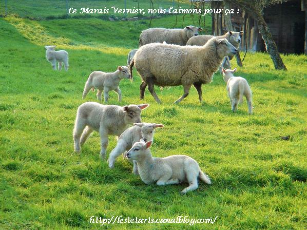 Le Marais Vernier nous l'aimons pour ça 001
