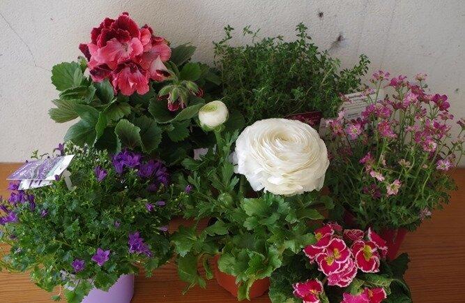 achats fleurs