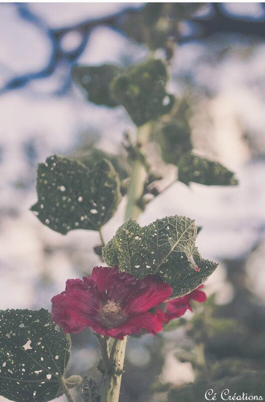 fleurs_jardin-23