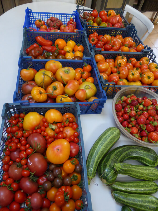 11-tomates, courgettes, concombres (2)